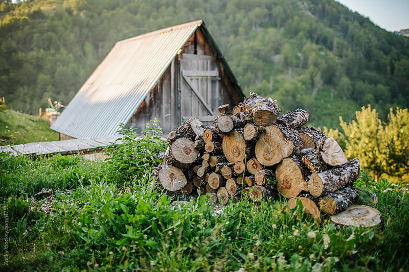 Wood logs  by Zocky for Stocksy United