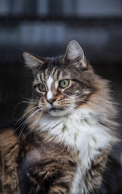 cat by Sonja Lekovic for Stocksy United