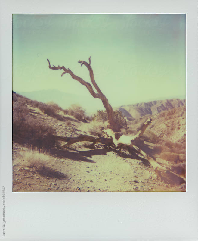 Polaroid of a fallen tree. by Lucas Saugen for Stocksy United