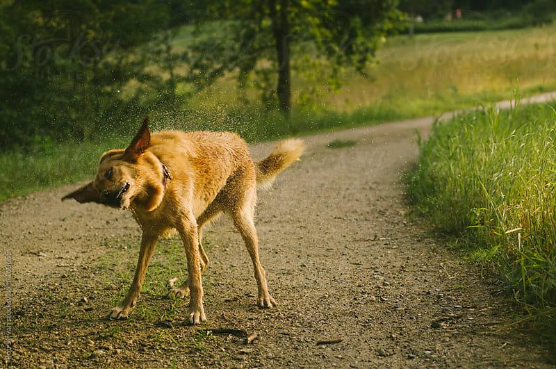 Dog Shake by Rob Sylvan for Stocksy United
