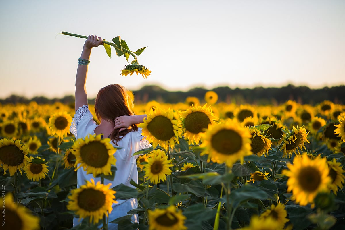 Woman Walking Through The Sunflower Field At Sunset by Mosuno - People, Sunflower