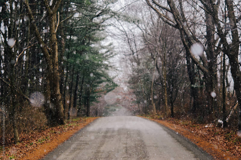 Snow falling on a road through trees by Deirdre Malfatto for Stocksy United