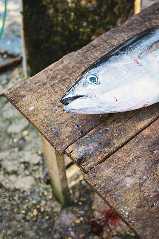 Raw fish for sushi on wooden table by Trent Lanz for Stocksy United