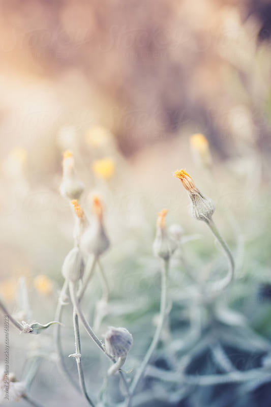 small plants with sunset light by Javier Pardina for Stocksy United