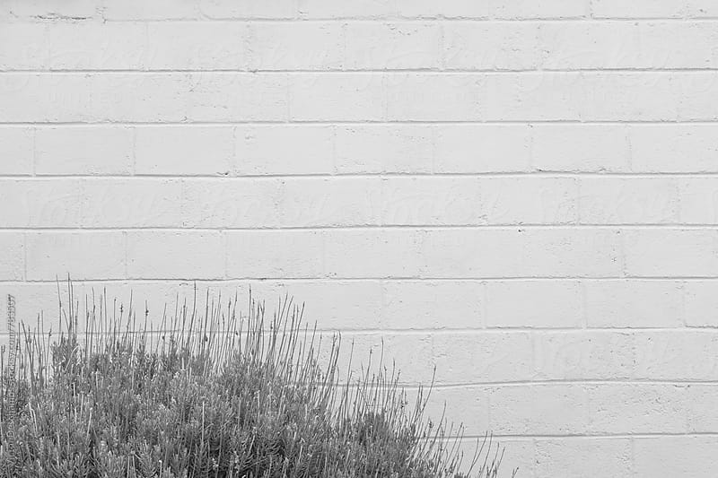 White Brick Wall by Victor Deschamps for Stocksy United