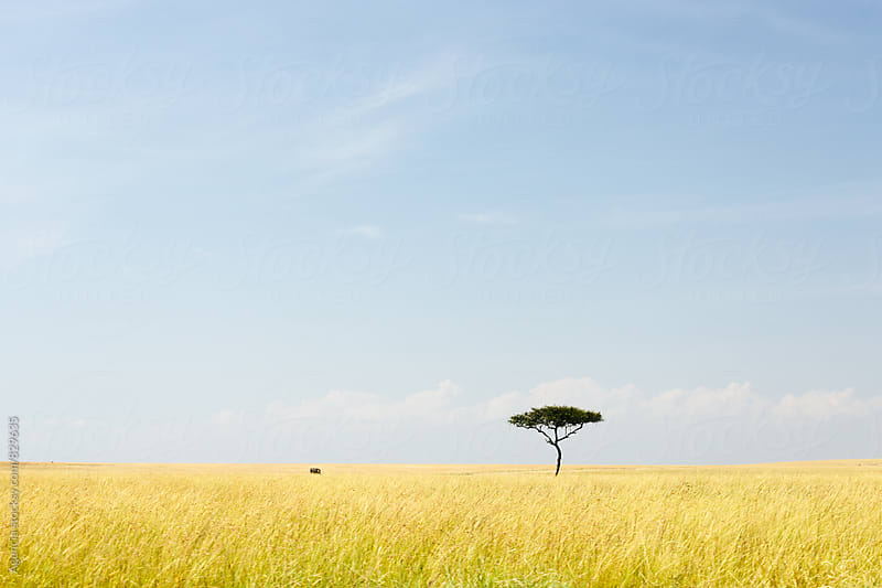 African Landscape by Agencia for Stocksy United