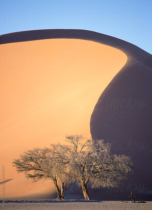 Tree below sand dune. Sossusvlei. Namibia,  by Hugh Sitton for Stocksy United