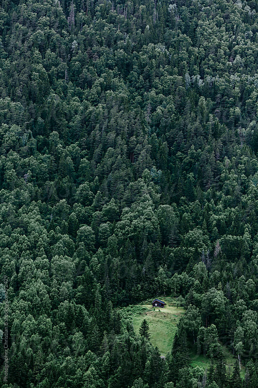 Norwegian Wood by Photographer Christian B for Stocksy United