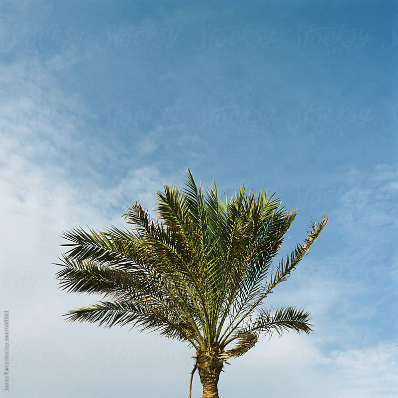 Barcelona Palm by James Tarry for Stocksy United