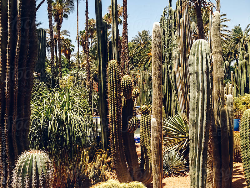 cactus garden  by Jordi Rulló for Stocksy United