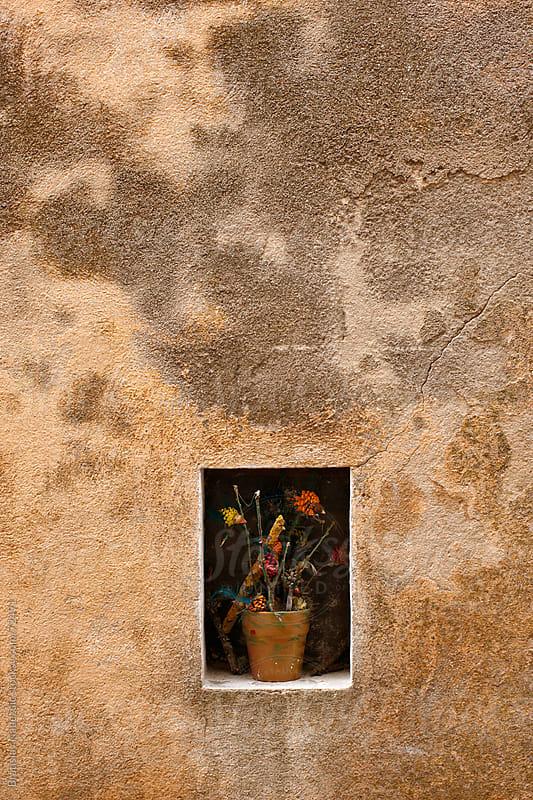 Flower in the pot by Bratislav Nadezdic for Stocksy United