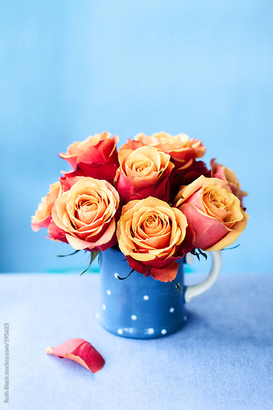 Orange roses in a blue mug by Ruth Black for Stocksy United