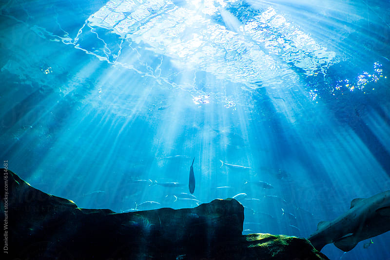 Fish swimming in an aquarium with the sun shining down. by J Danielle Wehunt for Stocksy United
