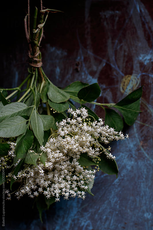 Elderflower bunch by Babett Lupaneszku for Stocksy United