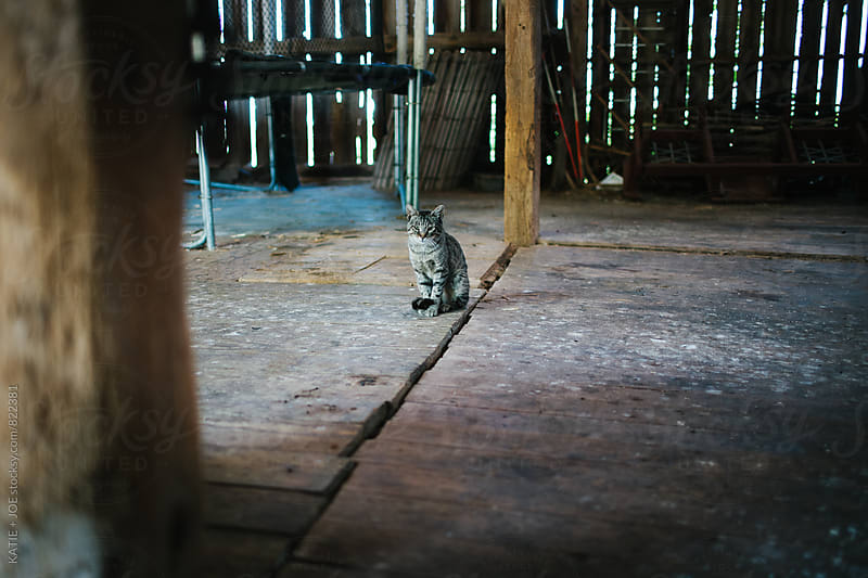 Cat Sitting in the Barn by KATIE + JOE for Stocksy United