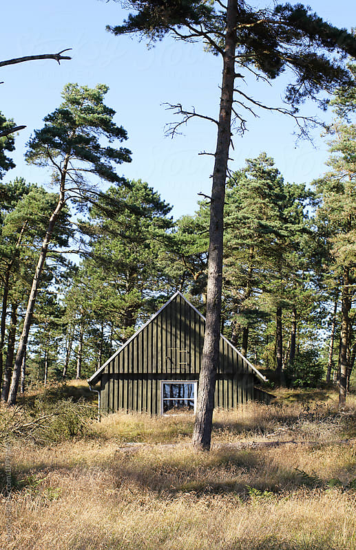 Simple cabin in the woods by Marcel for Stocksy United