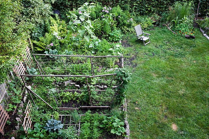 Urban Garden by Anjali Pinto for Stocksy United