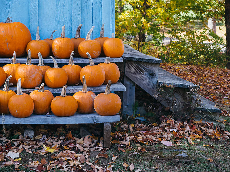 Pumpkins and leaves. Fall in New England. by Jeremy Pawlowski for Stocksy United