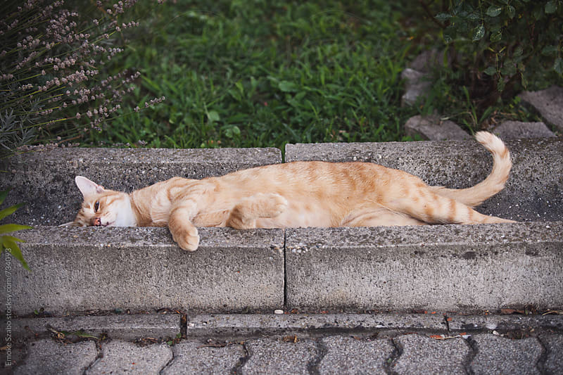 Cute cat lying on the gutter by Emoke Szabo for Stocksy United