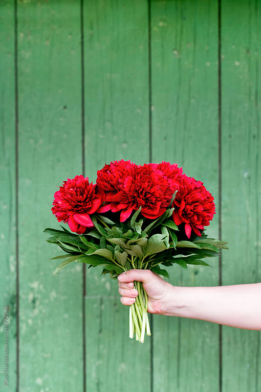 Woman holding a bouquet of red peonies by Pixel Stories for Stocksy United