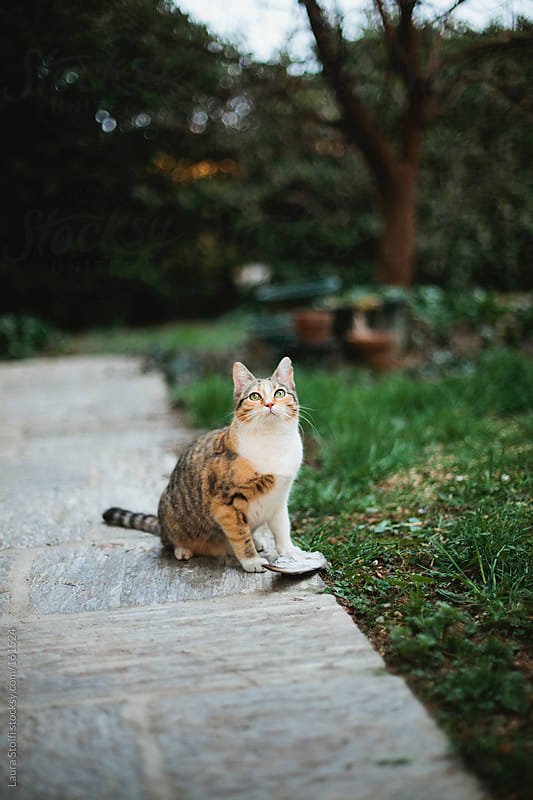 Cat sits in front of a dead pigeon's wing by Laura Stolfi for Stocksy United