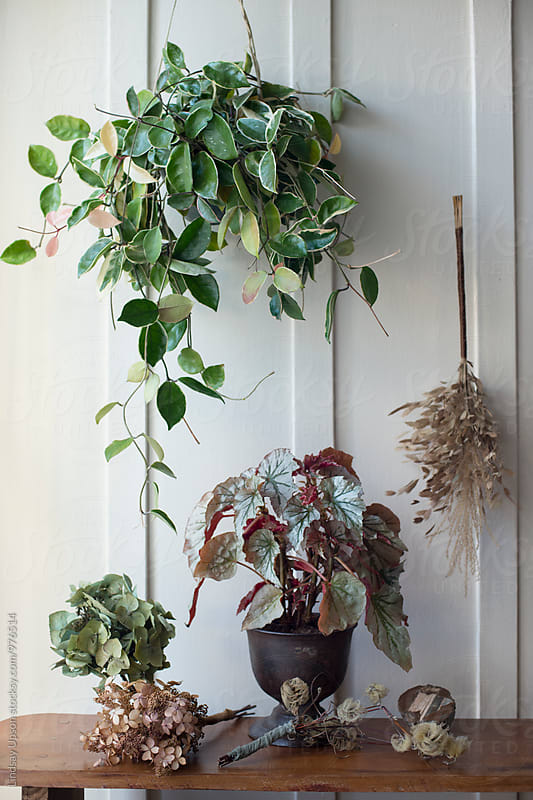 Plant Montage Vertical  by Lindsay Upson for Stocksy United