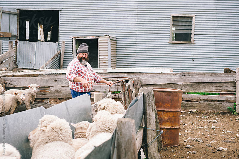 Australian Sheep Farmer with his Sheep by Gary Radler Photography for Stocksy United