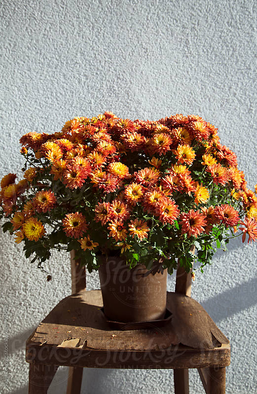 plant in a pot with orange flowers and copyspace by Sonja Lekovic for Stocksy United