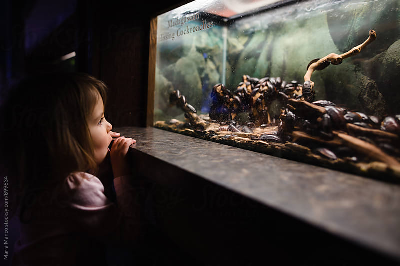 little girl looks at cockroaches at zoo by Maria Manco for Stocksy United