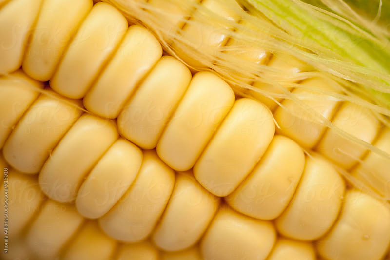 Corn on the Cob by Rhonda Adkins for Stocksy United