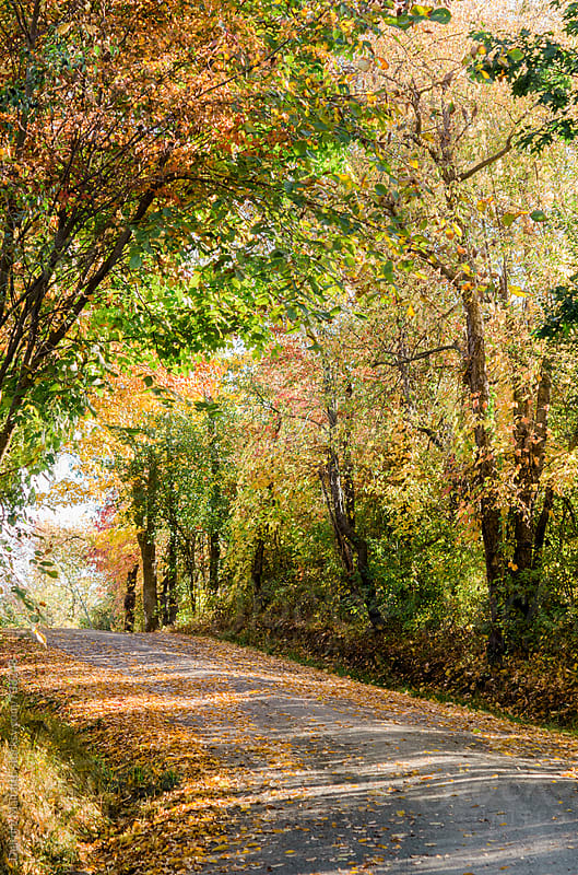 dirt road in autumn by Deirdre Malfatto for Stocksy United