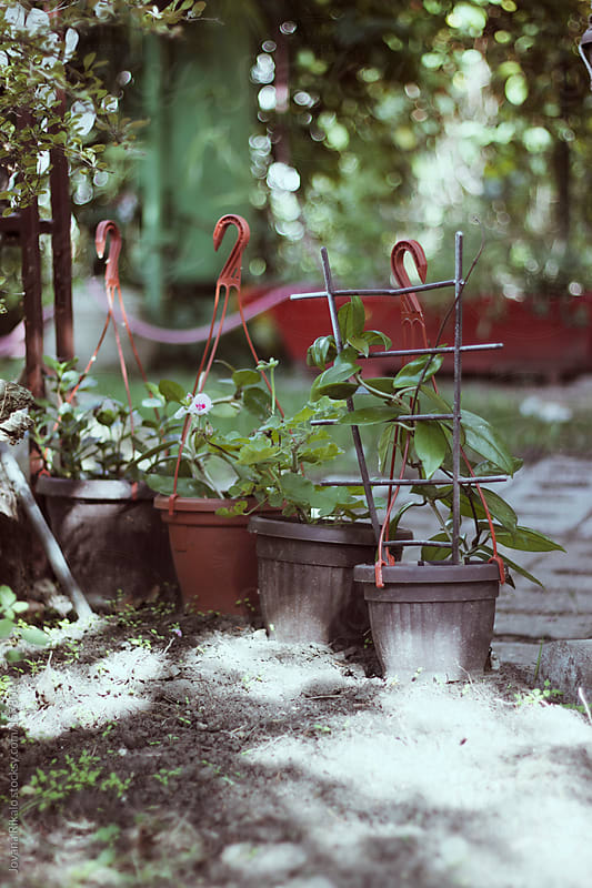 Plants in the garden by Jovana Rikalo for Stocksy United
