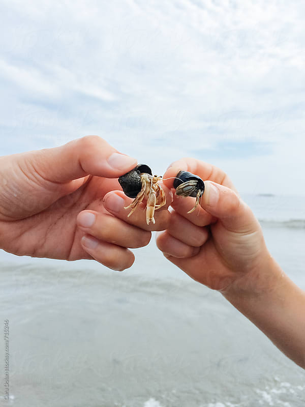 Hand holds little hermit crabs at the ocean by Cara Slifka for Stocksy United