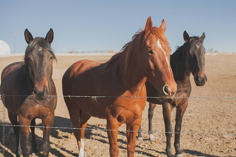 Horses standing together by luke + mallory leasure for Stocksy United