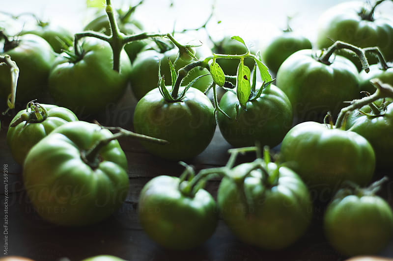 Green tomatoes by Melanie DeFazio for Stocksy United