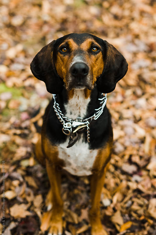 Dog sitting outdoors on trail by Isaiah & Taylor Photography for Stocksy United