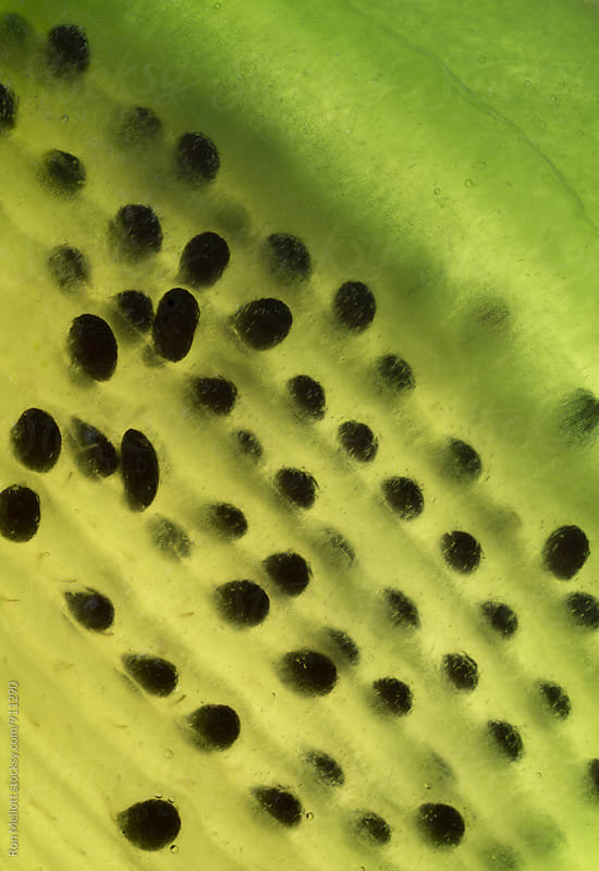 Closeup macrophotograph of a slice of kiwi fruit texture seeds patterns inside by Ron Mellott for Stocksy United
