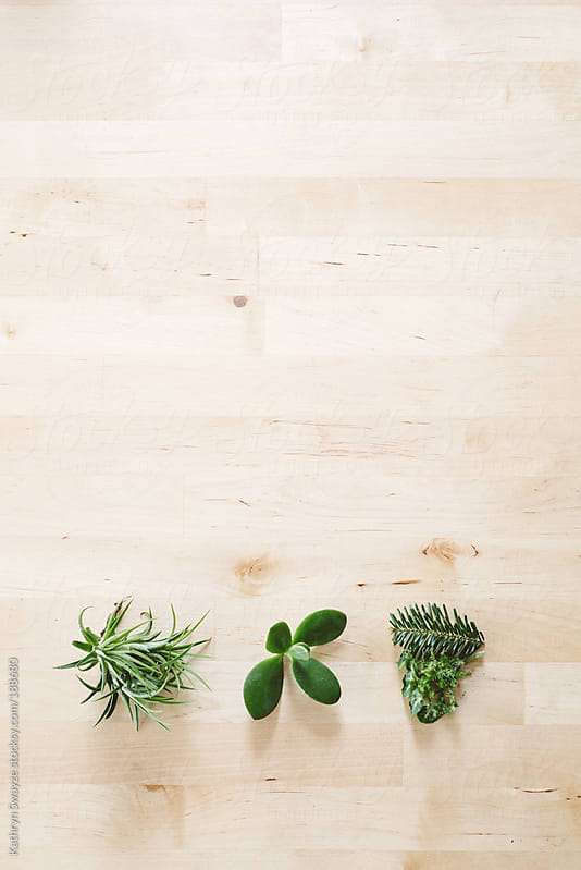 Cuttings of tillandsia, jade, pine, and moss sit on a table by Kathryn Swayze for Stocksy United