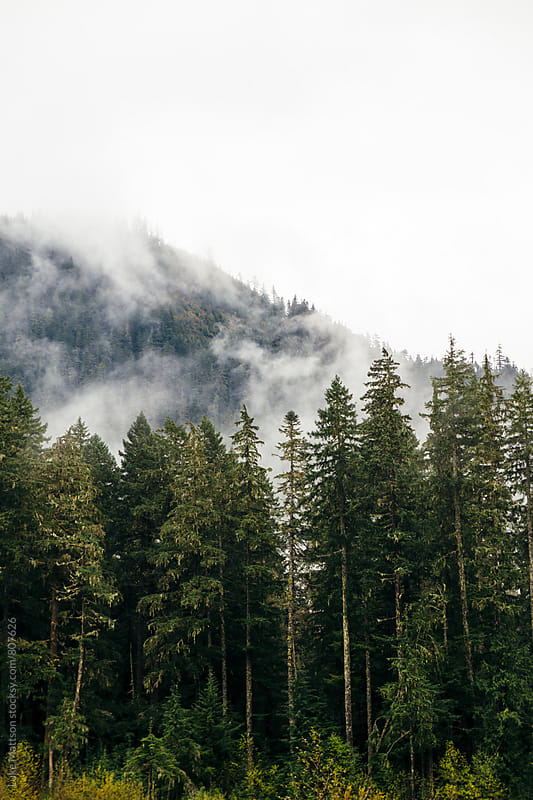 Evergreen Pine Forest Below Misty Mountain Top by Luke Mattson for Stocksy United
