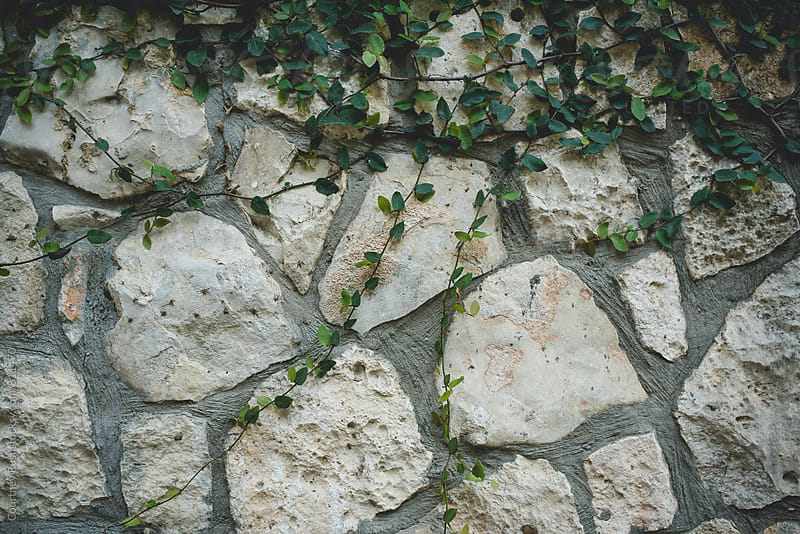 green vines on a stone wall  by Courtney Rust for Stocksy United