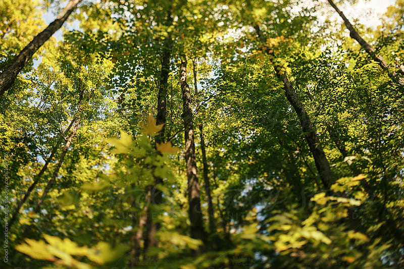 Green Forest by Good Vibrations Images for Stocksy United