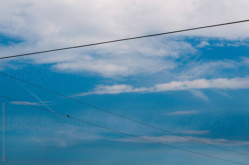 telephone lines, blue skies, and a bird by Margaret Vincent for Stocksy United
