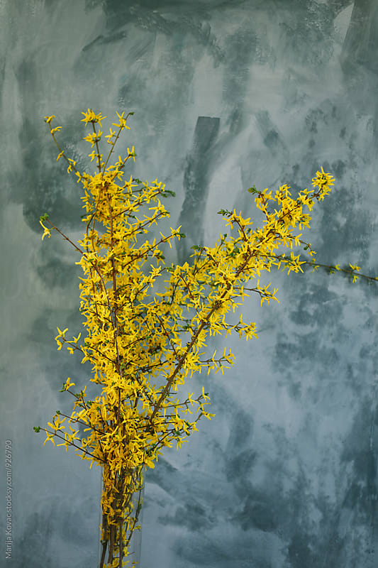 Yellow flowers  by Marija Kovac for Stocksy United