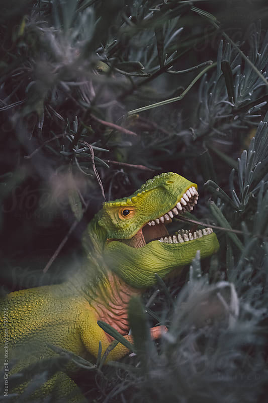 Dangerous T-Rex in the garden by Mauro Grigollo for Stocksy United