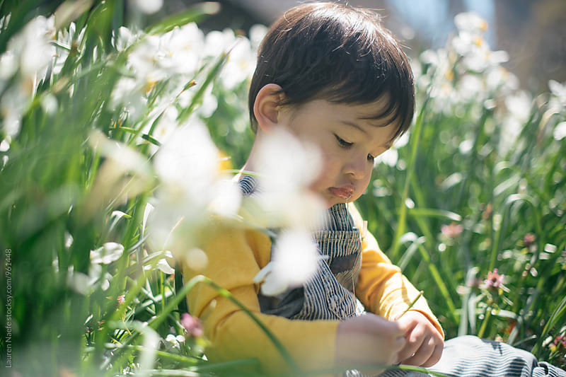Toddler boy looking at flowers by Lauren Naefe for Stocksy United
