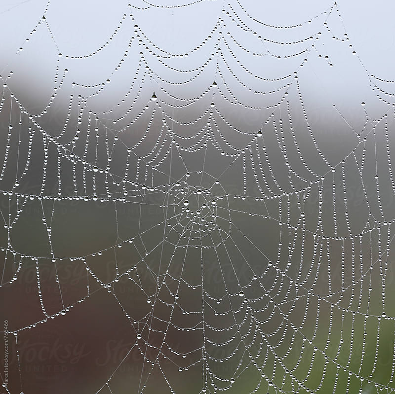 beautiful spider web with dewdrops by Marcel for Stocksy United