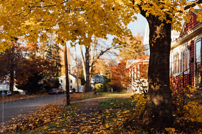 village street in autumn by Deirdre Malfatto for Stocksy United