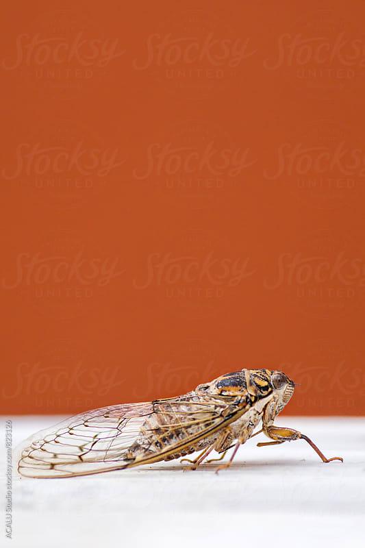 Buzzer bug by ACALU Studio for Stocksy United