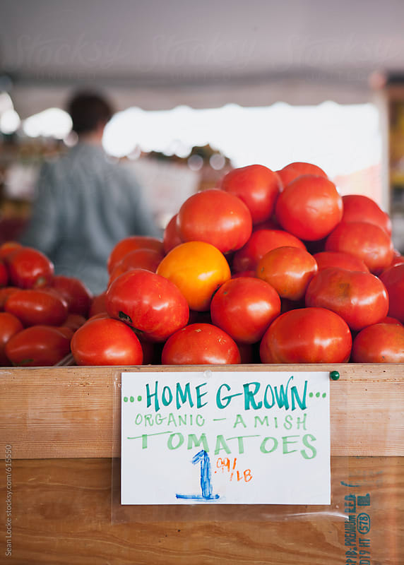 Market: Table Full Of Organic Tomatoes by Sean Locke for Stocksy United