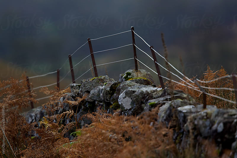 A fenceline in the murk on top of a stone wall by Will Clarkson for Stocksy United